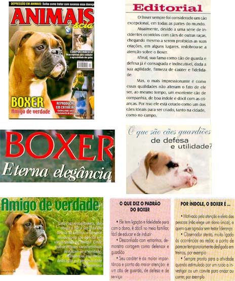Airaf Boxers Reportagens